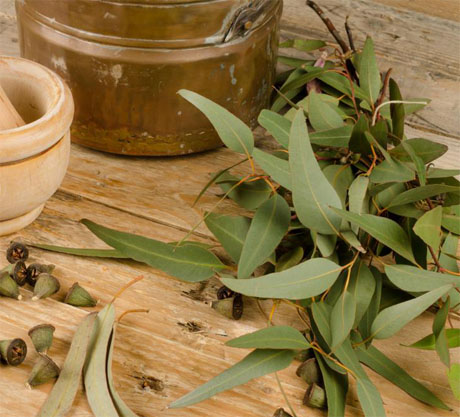 home-pedicure-eucalyptus-leaves