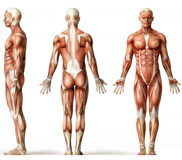 what-causes-muscle-loss