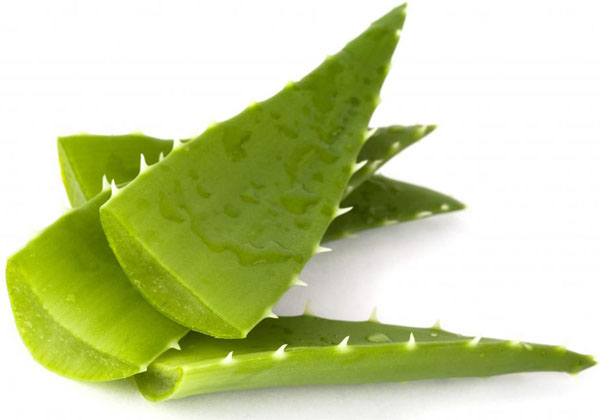 aloe-vera-gel-help-reduce-scarring