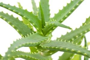 приметы о комнатных растениях